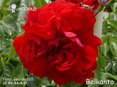 Belkanto
