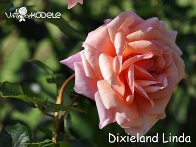 Dixieland Linda