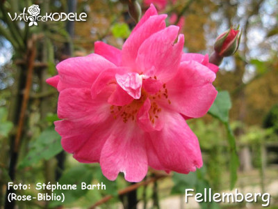Fellemberg