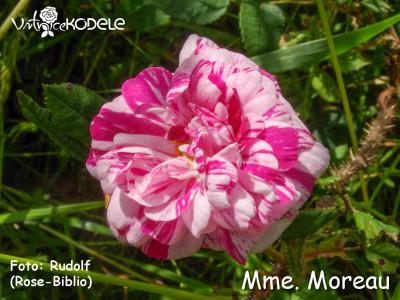 Mme. Moreau