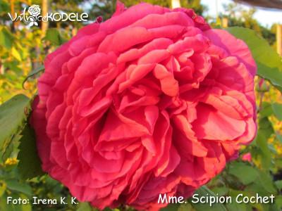 Mme. Scipion Cochet