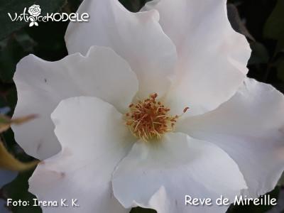 Rêve de Mireille