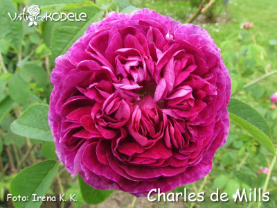 Charles de Mills