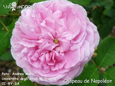 Chapeau de Napoleon