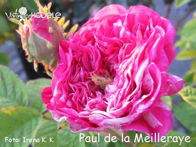 Paul de la Meilleraye