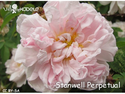 Stanwell Perpetual