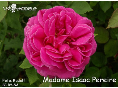 Mme. Isaac Pereire