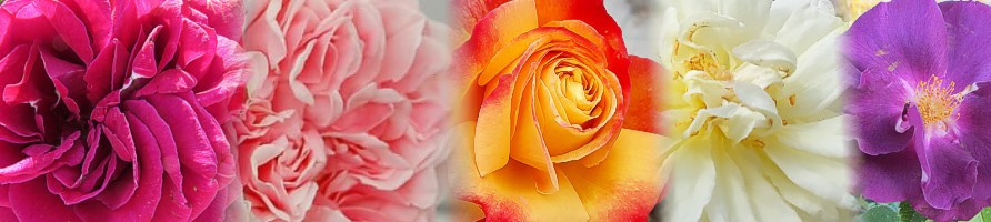 Barva cvetov