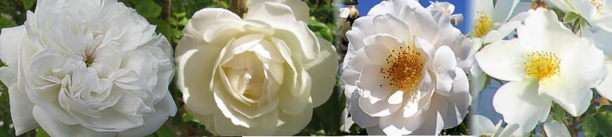 Oblika cvetov