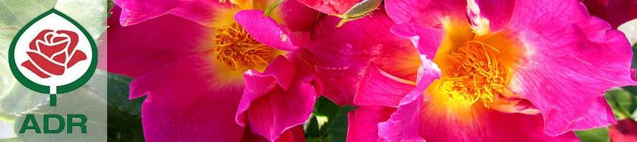 ADR vrtnice