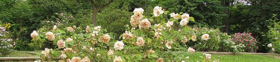 Velikost vrtnic