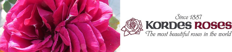 Kordesove vrtnice